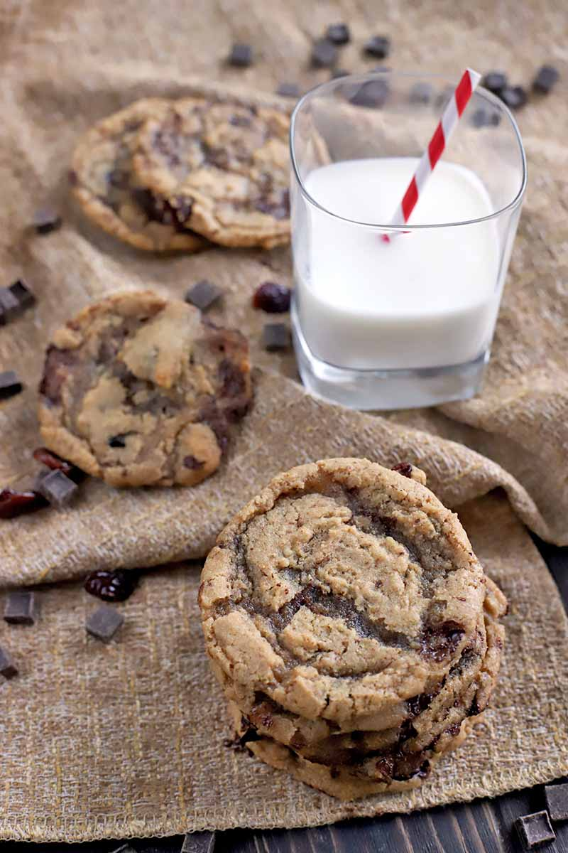 Oblique shot of a small stack of homemade vegan cookies in the foreground with two more beside a glass of milk with a red and white striped straw in the background, on a folded and gathered piece of light brown burlap with chocolate chunks scattered across the surface, on a dark brown wood table.