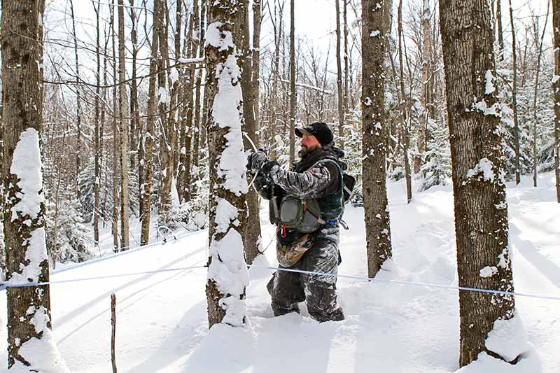 Horizontal image of a man dressed in winter garb tapping a tree.