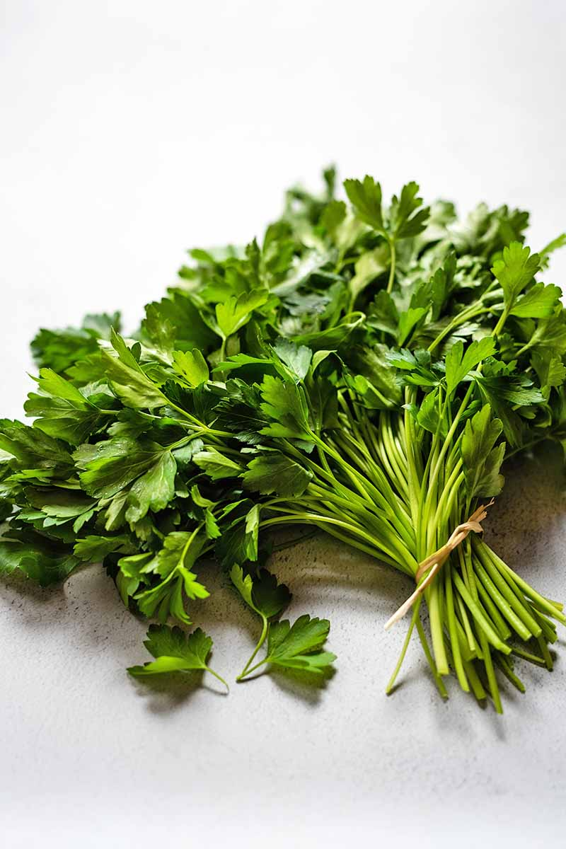 A bunch of fresh green Italian flat-leaf parsley on a white surface with gray speckles.