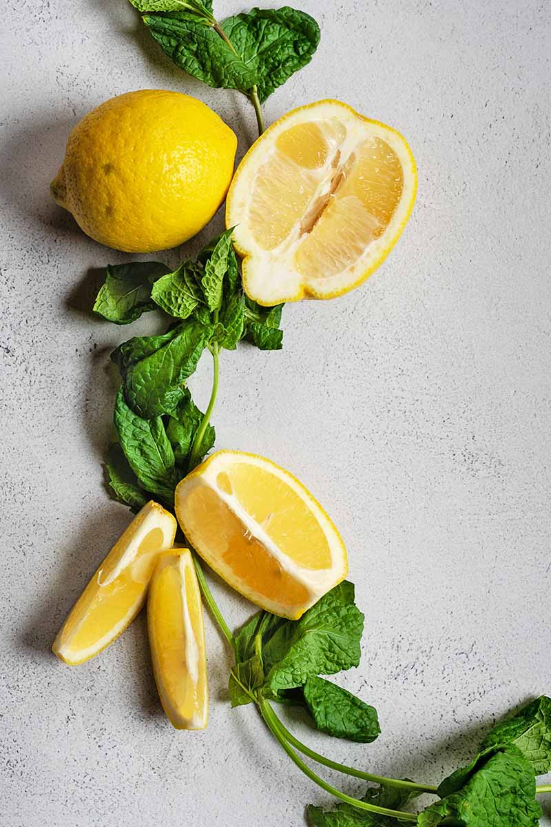 Overhead shot of whole, halved, and sliced lemon with sprigs of fresh mint, on a white and gray speckled surface.