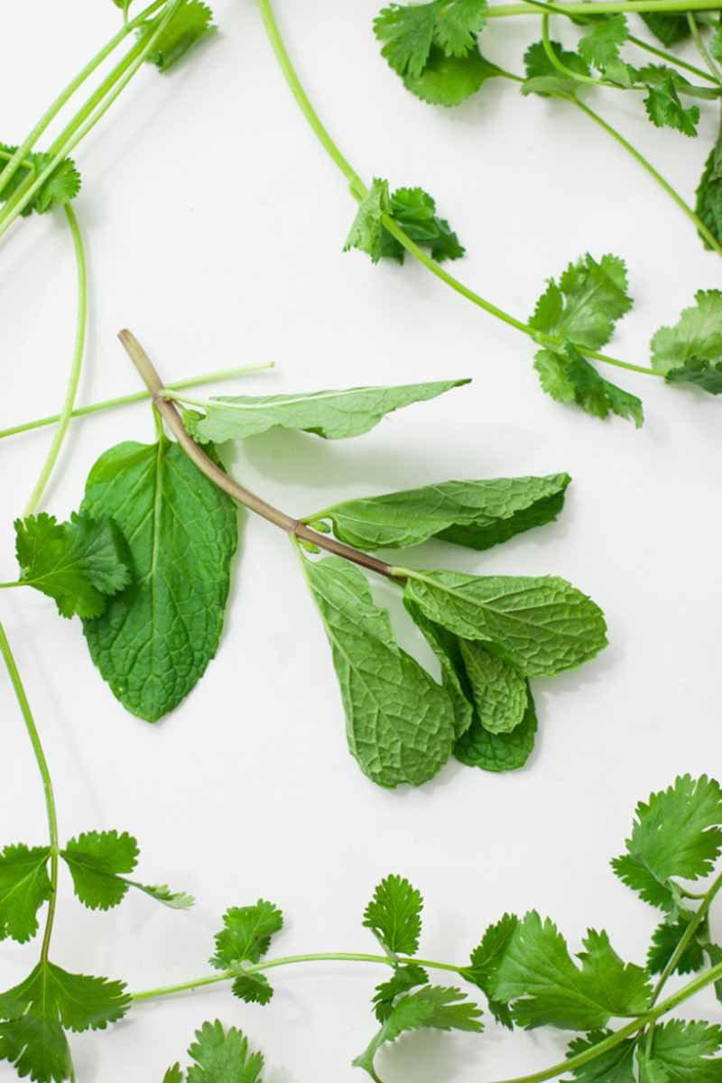 Vertical image of fresh herbs on a white surface.
