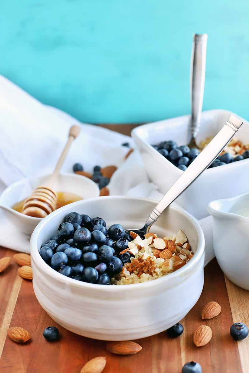 Vertical image of one round and one square white ceramic bowl of quinoa, blueberries, and almonds, with spoons stuck into the bowls, to teh right of a small white dish of honey with a white dipper, and a white pitcher of milk to the right of the frame, on a white gathered cloth on top of a brown wood surface with scattered nuts and berries, on a robin's egg blue background.