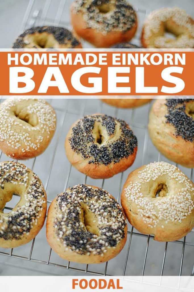 Top down view of a batch of Einkorn bagels on a cooking rack.
