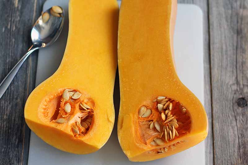 A butternut squash has been cut in half and rests on a white plastic cutting board with the seeds inside exposed, with a spoon containing a few seeds to the left, on a brown unfinished wood surface.