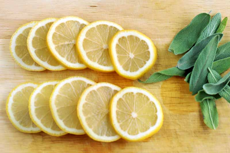 Ten thin lemon slices overlapping and fanned out in two rows, to the left of a small pile of fresh green sage leaves, on a wood countertop.