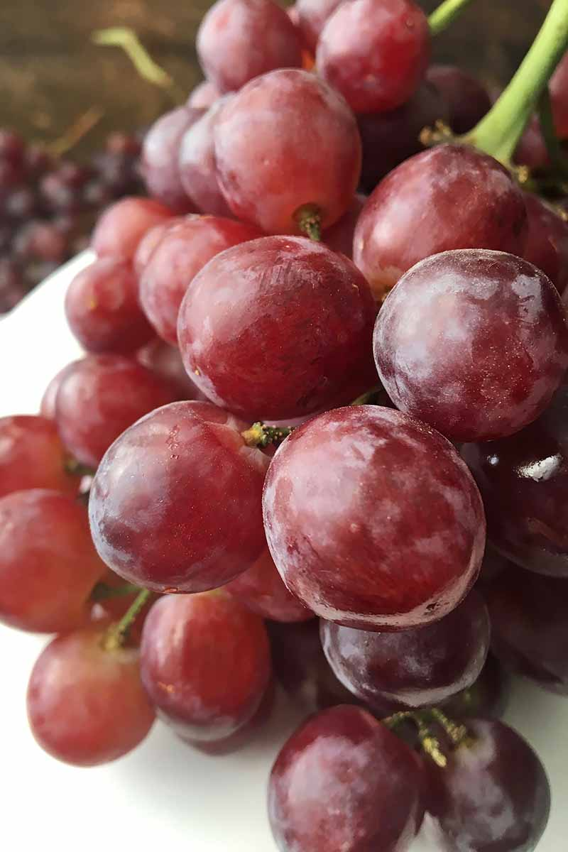 Vertical close-up image of fresh grapes.