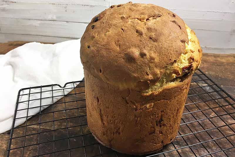 Horizontal image of a baked kulich loaf on a cooling rack.