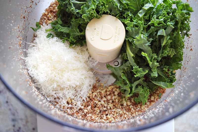 Overhead closely cropped shot of piles of torn green kale, chopped toasted almonds, and grated cheese, in a clear plastic food processor, on a beige countertop with black and gray speckles.