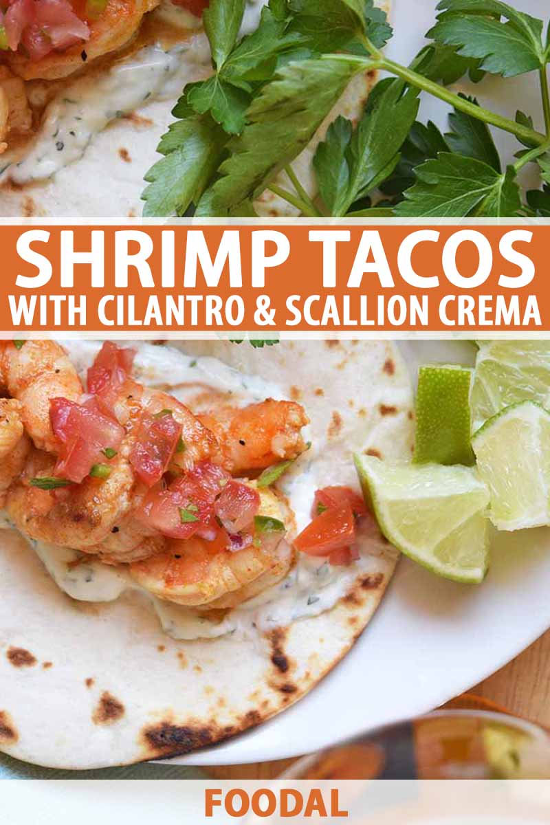Overhead horizontal image of shrimp tacos with pico de gallo on a white plate with sprigs of fresh cilantro and lime wedges, on a wood surface, printed with orange and white text at the midpoint of the frame and at the bottom.
