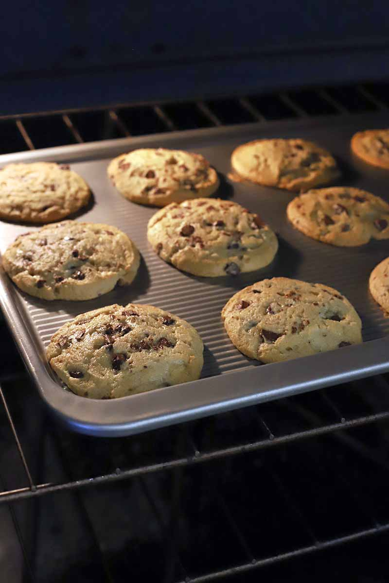 Vertical image of chocolate chip cookies on a metal baking sheet in an oven.