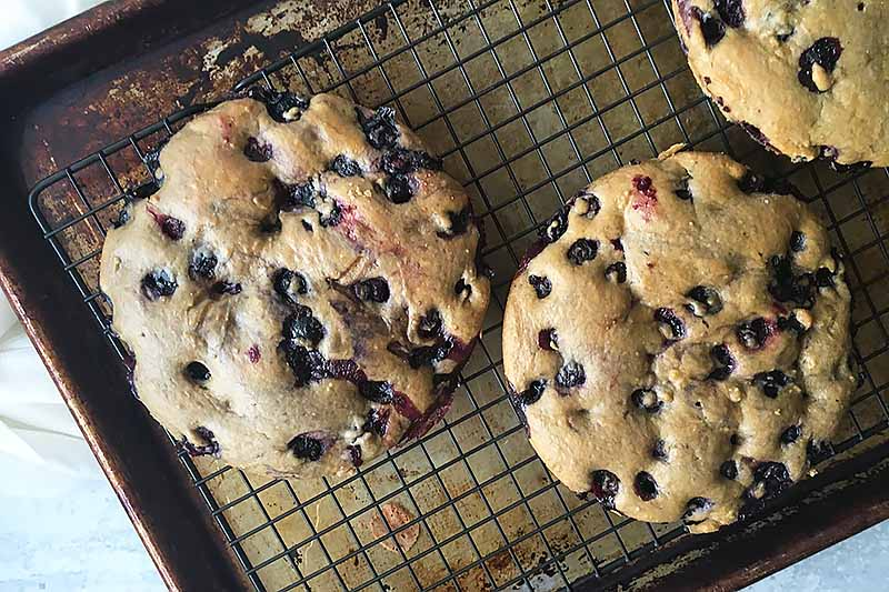 Horizontal image of cake rounds with fresh berries on a cooling rack.