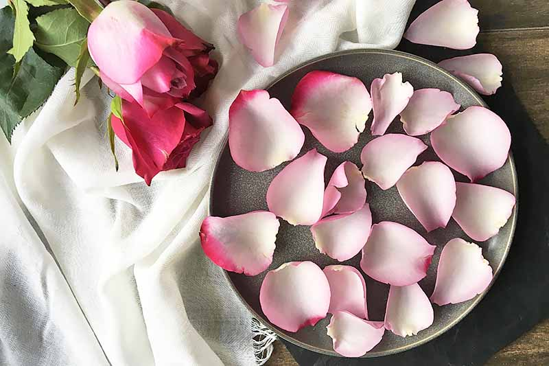 Horizontal image of a gray plate with individual pink petals on a white towel.