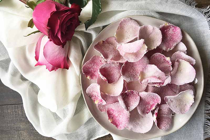 Horizontal image of a plate of pink rose petals on a white towel next to roses.