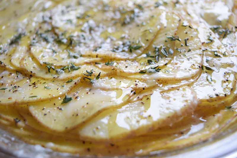 Closeup horizontal image of a baked casserole of thinly sliced potatoes with melted cheese and fresh herbs on top.