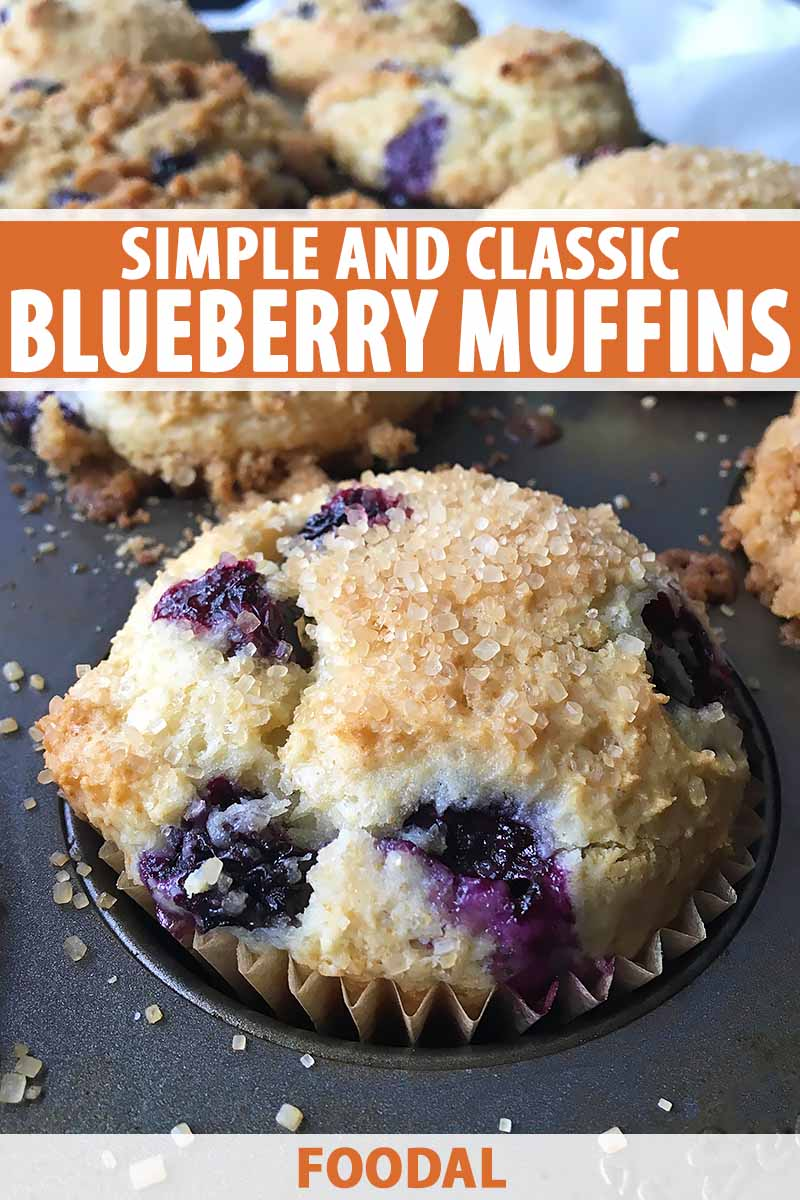 Vertical close-up image of a blueberry muffin in the baking pan, with text on the top and bottom of the image.
