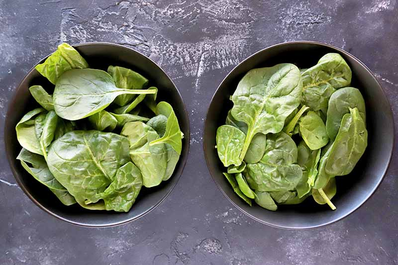 Overhead horizontal image of two gray bowls filled with raw baby spinach, on a gray surface with white scratches and streaks.