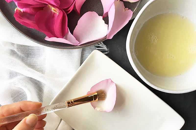 Horizontal image of applying egg whites on a single rose petal on a white plate with a brush, next to a gray plate with more petals.