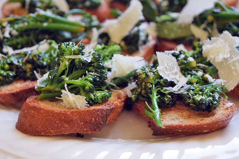 Horizontal closely image of baguette toast rounds topped with broccoli rabe and shaved Pecorino cheese, on a white plate.