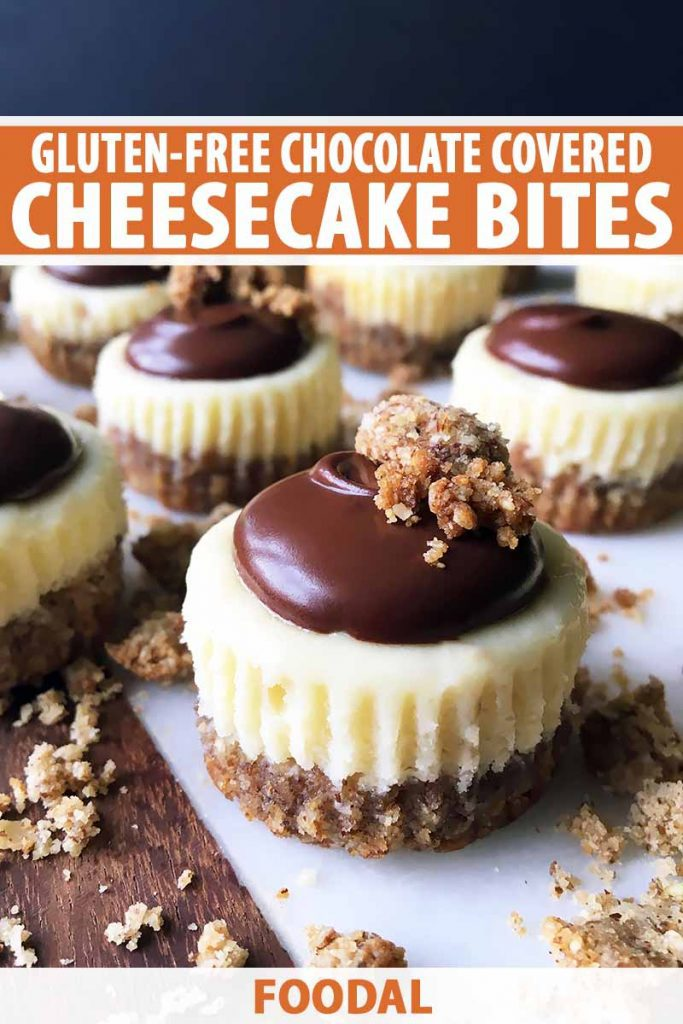 Vertical image of cheesecake bites with chocolate, and text on the top and bottom of the image.