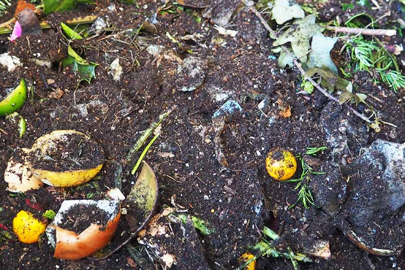 Overhead horizontal image of brown humus flecked with produce peels and other forms of kitchen and garden waste to make compost.