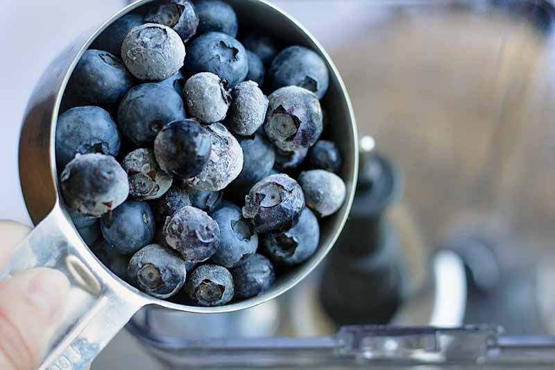 Horizontal image of a glass measuring cup pouring blueberries into a smoothie.