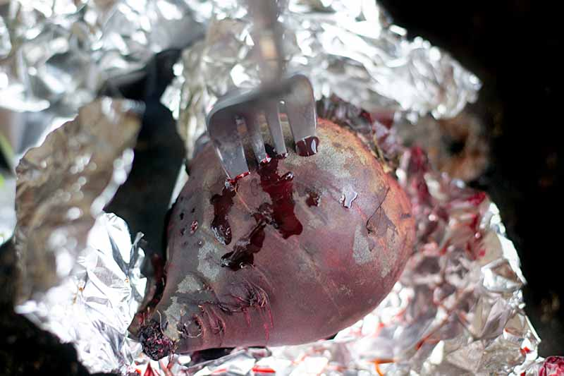 Closeup overhead horizontal image of a roasted beet with a fork stuck into it to check for doneness, with purple juices leaking out onto a piece of foil on a metal baking pan.