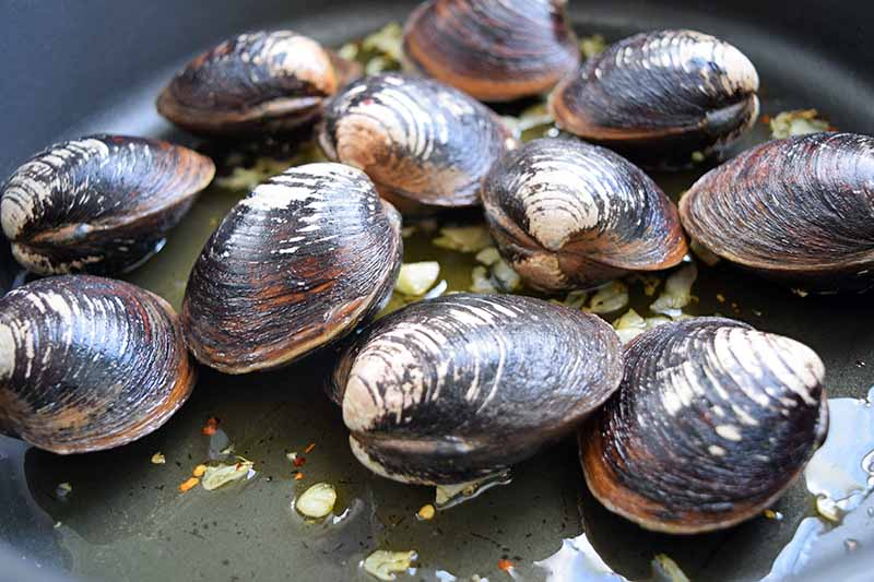 Brown uncooked whole clams in a frying pan.