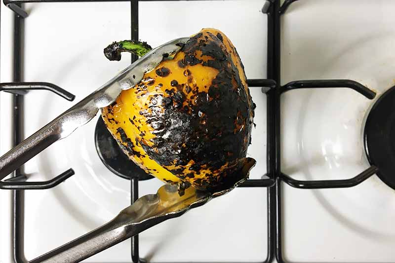 Horizontal image of a thoroughly charred yellow vegetable held by tongs over a burner.