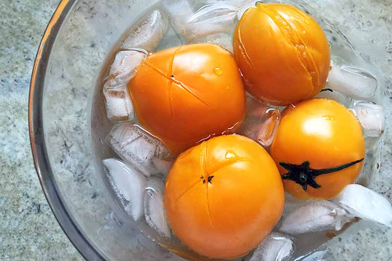 Horizontal closely cropped overhead image of four golden tomatoes that have been blanched, chilling in an ice bath in a large clear glass bowl, on a gray speckled surface.