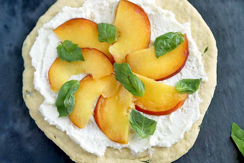 Horizontal closely cropped overhead image of a round flatbread crust spread with ricotta and topped with fanned out peach slices and basil leaves, with a piece of fresh basil at the bottom right of the frame, on a grayish navy blue surface.