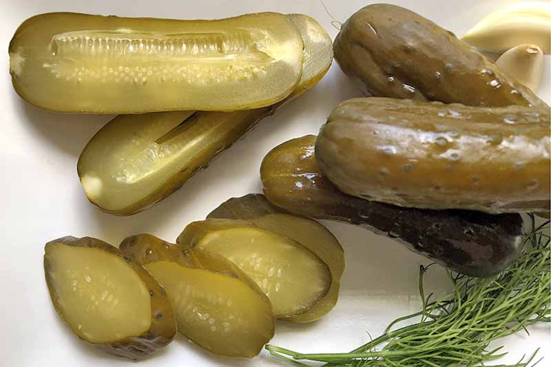 Horizontal overhead closely cropped image of whole, halved, and sliced pickles, on a white ceramic dish with garlic and sprigs of dill.