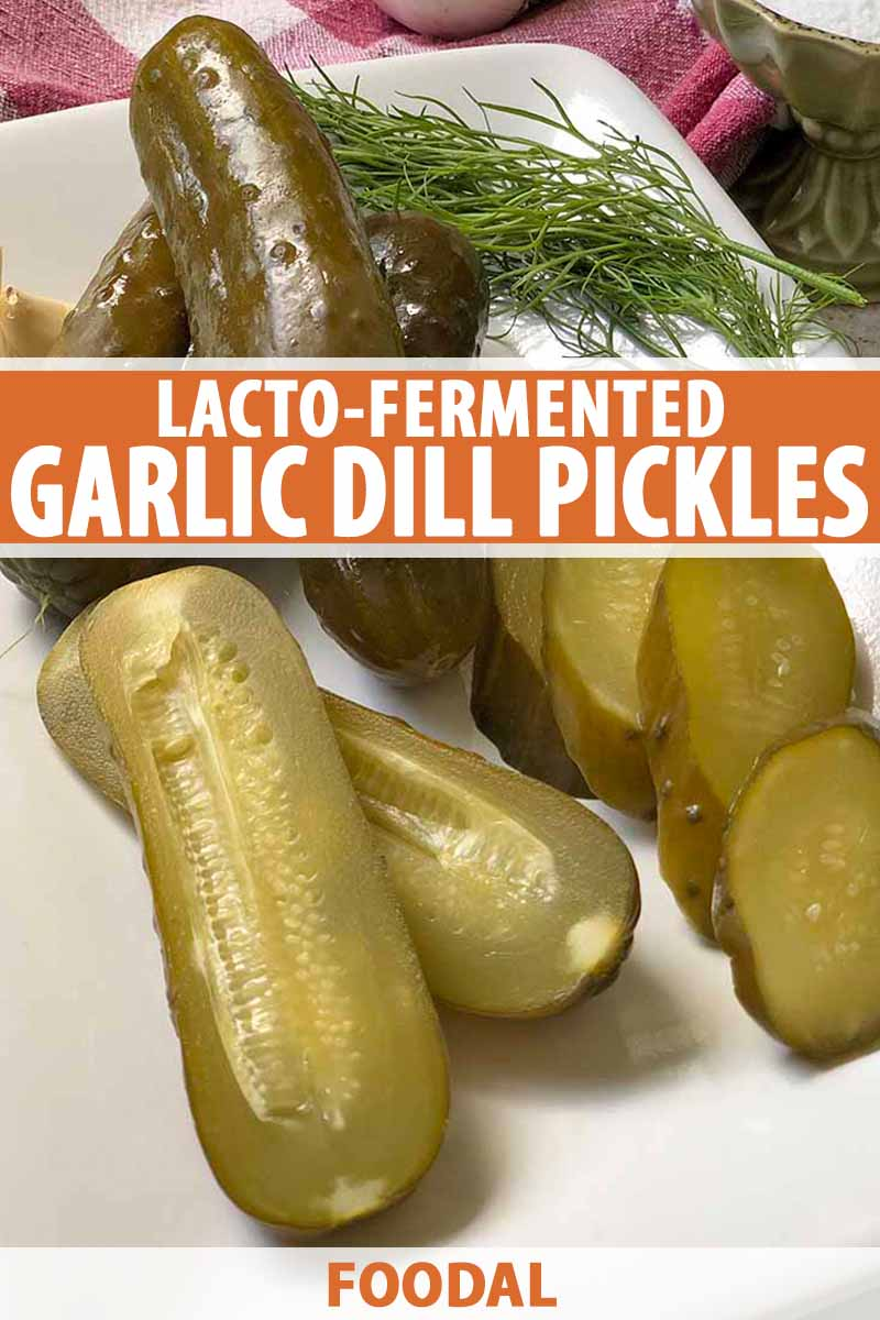 Vertical oblique overhead image of sliced, halved, and whole homemade pickles on a white ceramic rectangular serving dish with a sprig of fresh dill, on a countertop with a red and white checkered cloth in the background, printed with orange and white text at the midpoint and the bottom of the frame.