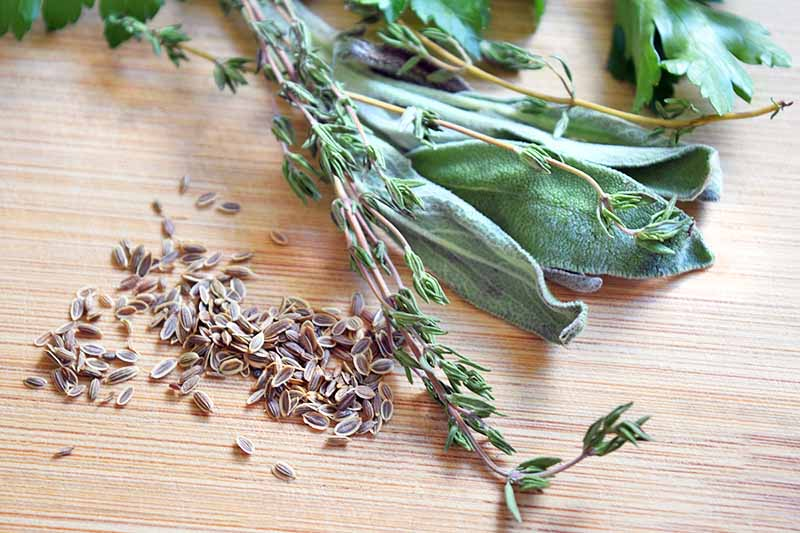 Closeup horizontal image of sprigs of fresh sage and thyme and a small pile of fennel seeds on a blonde unfinished wood cutting board.