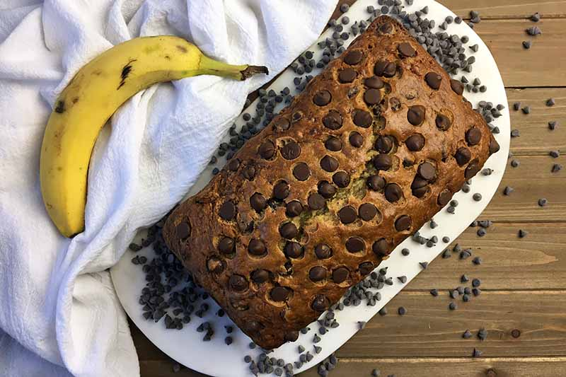 Horizontal top-down image of a whole loaf of chocolate chip banana bread.