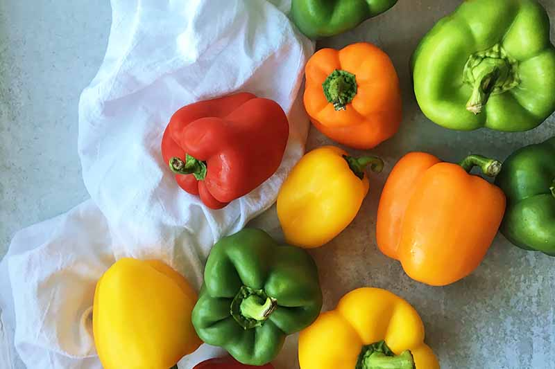Horizontal top-down image of assorted fresh vegetables in a variety of colors.