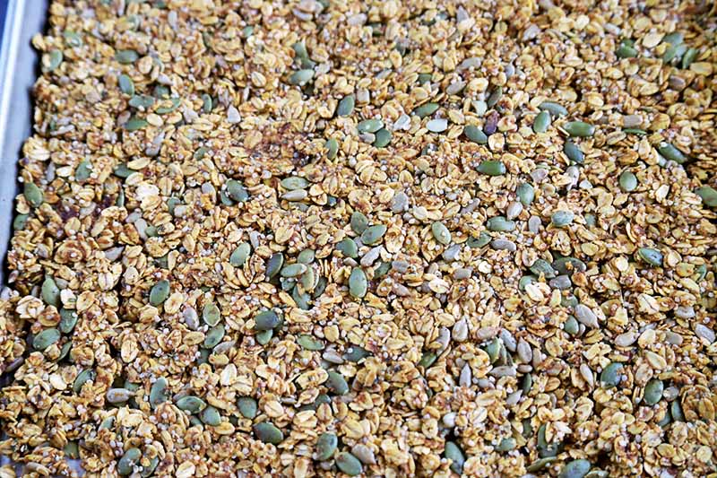 Horizontal overhead image of a mixture of seeds and grains to make granola, spread in a single layer on a metal rimmed sheet pan.