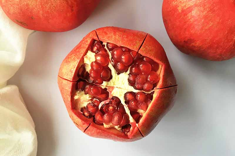 Horizontal image of a fruit with its top section removed and scores around the exterior skin.