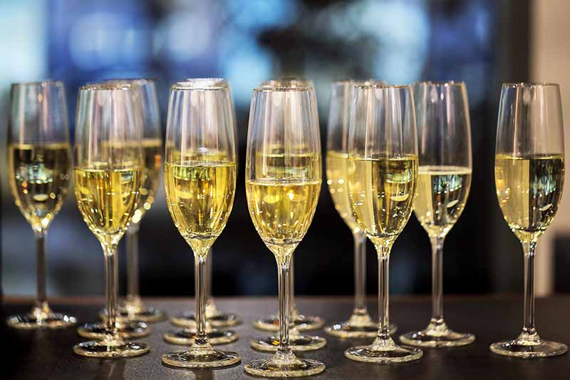 Twelve flutes filled with champagne on a brown table, with a mottled and diffused blue and white background.
