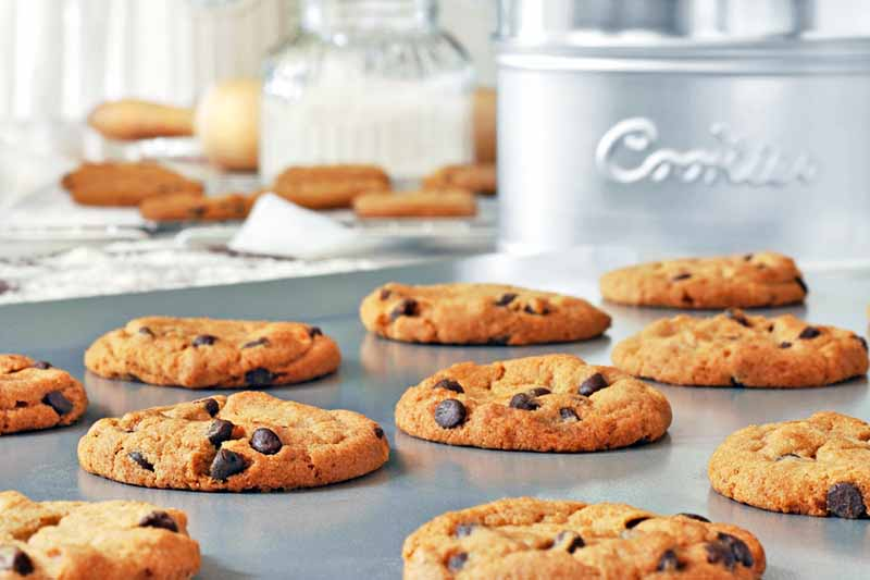 Horizontal image of freshly baked chocolate chip cookies arranged in rows on a rimless baking sheet, with a silver metal cookie tin and more of the baked treats and other ingredients in the background.