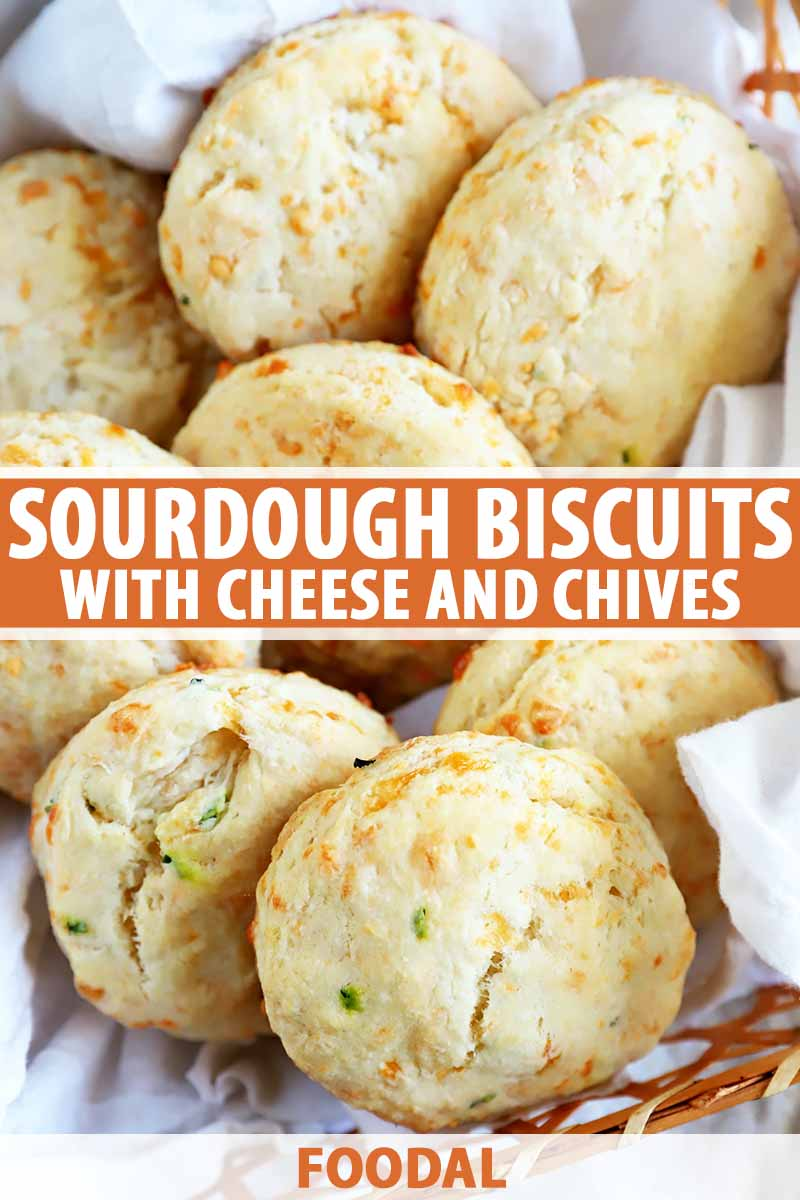 Vertical image of a basket of biscuits speckled with herbs and cheese, with text in the middle and on the bottom.