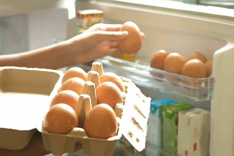 Horizontal image of holding a carton of eggs next to an open refrigerator.
