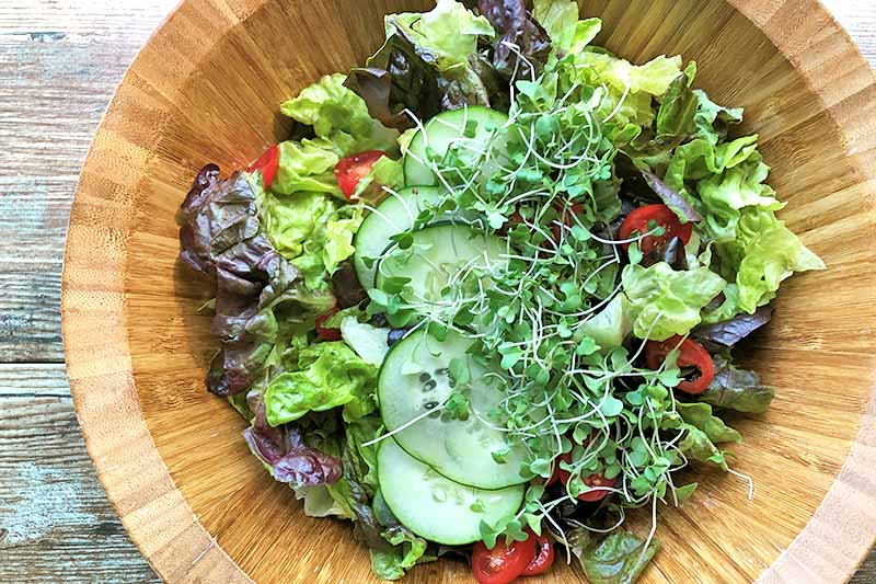 Horizontal image of a wooden bowl with lettuce, cucumbers, tomatoes, and sprouts.