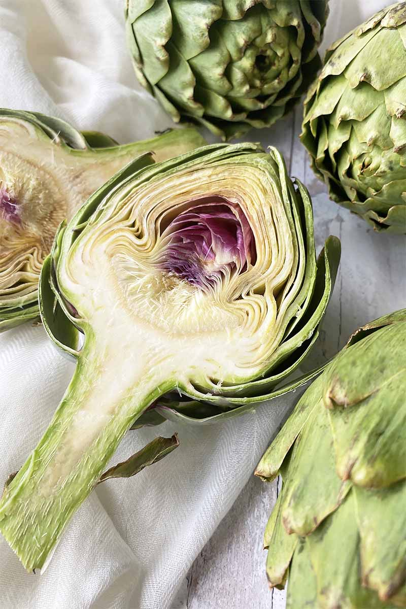Vertical image of a halved artichoke next to the same whole plants on a white background.