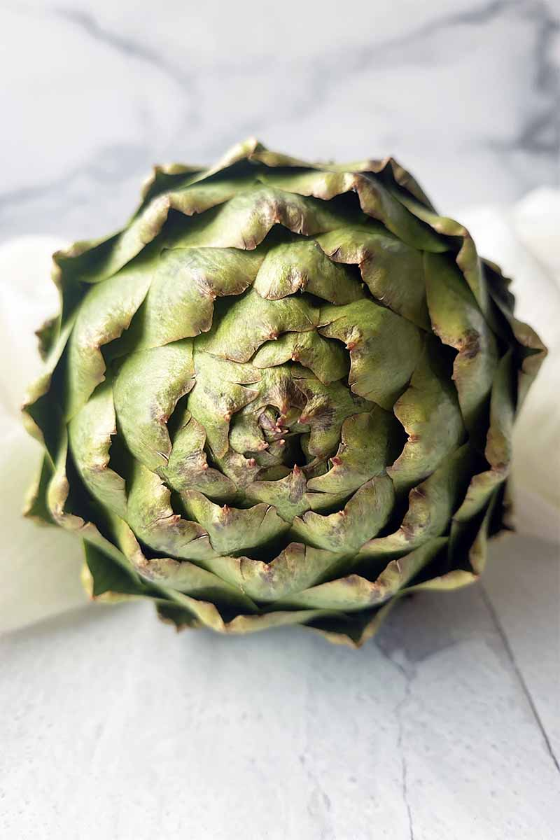 Vertical image of a front-faced green artichoke on a white surface in front of a white background.