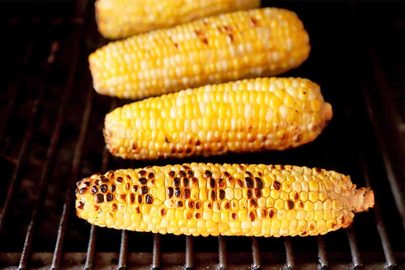 Horizontal image of grilling corn.