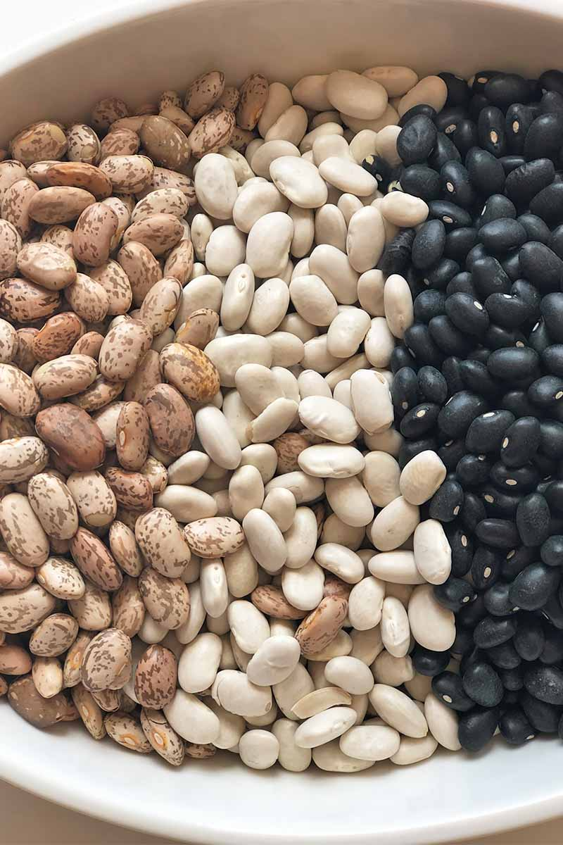 Vertical close-up image of three types of dried legumes neatly organized in rows in a large white bowl.