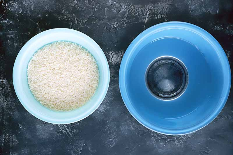 Horizontal image of a blue bowl with water and another blue bowl with uncooked white grains.