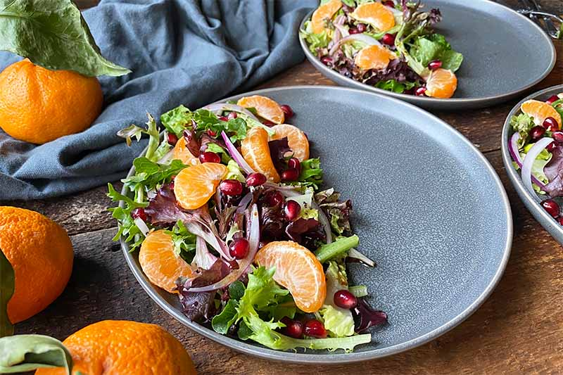 Horizontal image of a salad with citrus segments on a gray plate surrounded by whole citrus fruit.