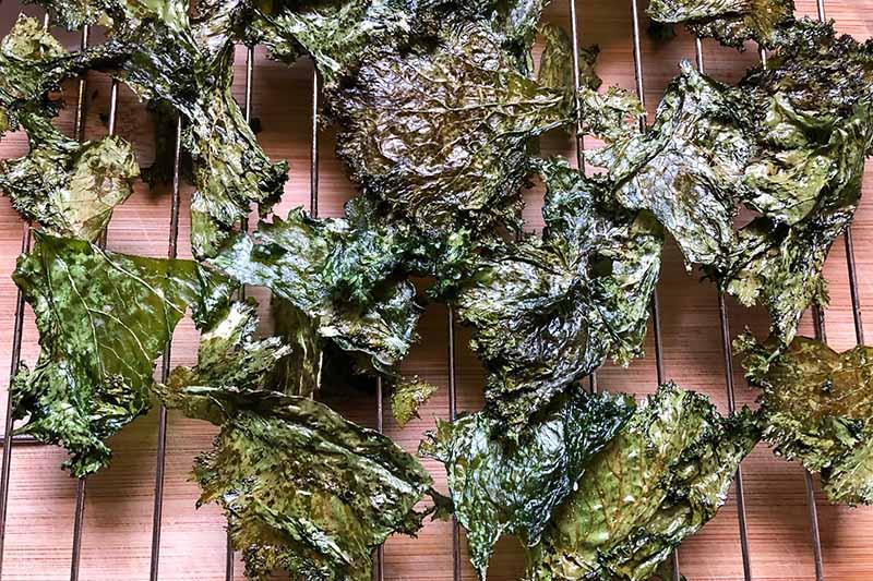 Horizontal image of baked leaf chips on a cooling rack.