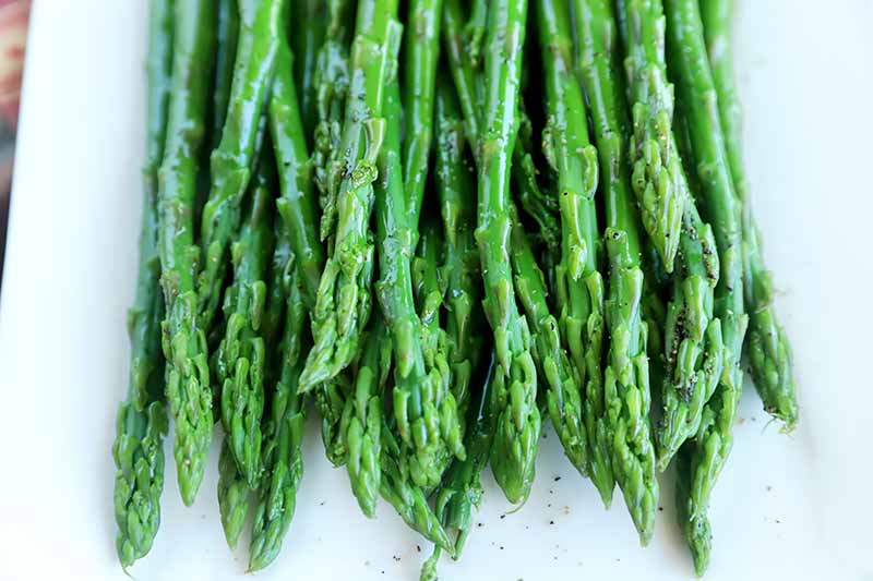 Horizontal image of the tips of asparagus on a white plate.